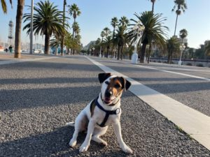 Great places to take your dog in Barcelona 2 Great places to take your dog in Barcelona