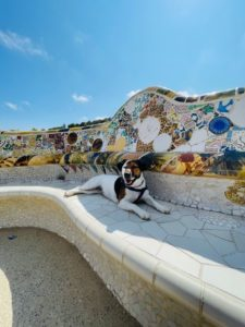 Great places to take your dog in Barcelona 4 Great places to take your dog in Barcelona