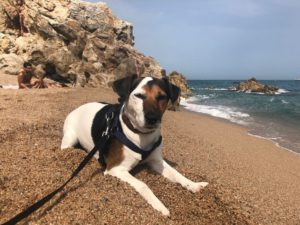 Great places to take your dog in Barcelona 7 Great places to take your dog in Barcelona